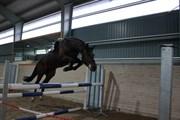 Hest til salg - Por Favor