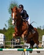 Hest til salg - ARTIEST H.