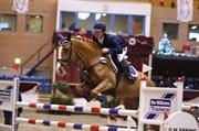 Hest til salg - BROHOLMS NICA