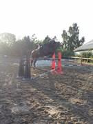 Hest til salg - TORNADO II - EM.