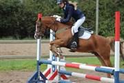 Hest til salg - ROSENGÅRDENS PUSKAS