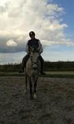 Hest til salg - TAI TONICO