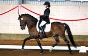 Hest til salg - ELMHOLTS NEPTUN