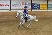 Hest til salg - Sweety Lemon