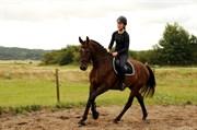 Hest til salg - DALENE'S MACHO