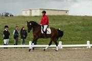 Hest til salg - ELLEGAARDS ATEA
