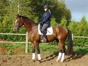 Hest til salg - GRAVGAARDS ZÁNÉ
