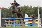 Hest til salg - CASSIUS