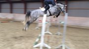 Hest til salg - QUEEN'S CANCARA