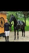 Hest til salg - LYSELL'S GAIO