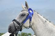 Hest til salg - CONVALIA N.