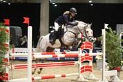 Hest til salg - AVANGARDAS