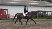 Hest til salg - JIVARO