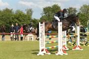 Hest til salg - CLONKELA MISS
