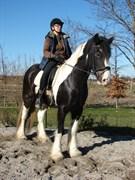 Hest til salg - VALENTINS KIRSTEN