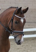 Hest til salg - ROMEO'S HOTLINE