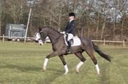 Hest til salg - FERDINAND