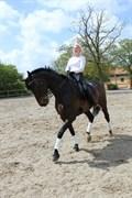 Hest til salg - CHANEL - H