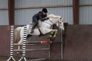 Hest til salg - IB