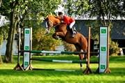 Hest til salg - Gizzel