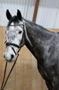 Hest til salg - B-CHELSEA S