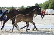 Hest til salg - ERA SEVERIANO