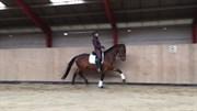 Hest til salg - SHEIK GERSDORF