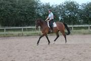Hest til salg - BROWN PLEASURE P.S.