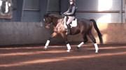 Hest til salg - GREDSTEDGAARDS STARDUST