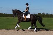 Hest til salg - STRANDAGERGÅRDS DANOIR