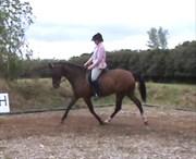 Hest til salg - ENYA