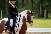 Hest til salg - KILMAY PRINCE PANTANI