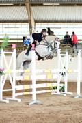 Hest til salg - Lady Chic