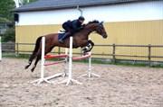 Hest til salg - PALM CITY