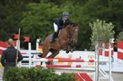 Hest til salg - LERTEVANGS COURAGE