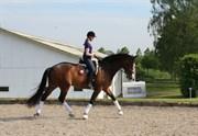 Hest til salg - VIVA CALIENTE