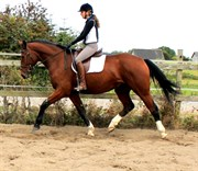 Hest til salg - STJERNE