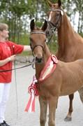 Hest til salg - FABIANA ELTON