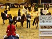 Hest til salg - FIE