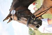 Hest til salg - MAGIC