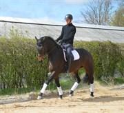 Hest til salg - SOFIESMINDES MY-WAY