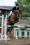 Hest til salg - Beautiful