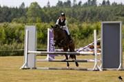 Hest til salg - OSCAR