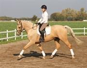Hest til salg - SOLHEIM'S RONALDINO