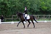 Hest til salg - SCHRØTERS FERRO