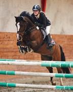 Hest til salg - Søgaardens Clinton