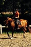 Hest til salg - CAROLA TETTI