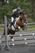 Hest til salg - Bella