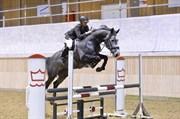 Hest til salg - Q-FYRSTEN