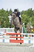 Hest til salg - Moosgård´s Lambada